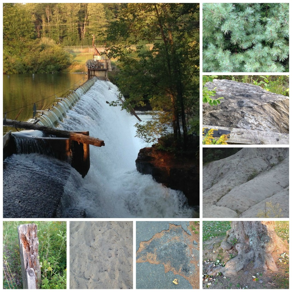 Presumpscot River Trail Collage